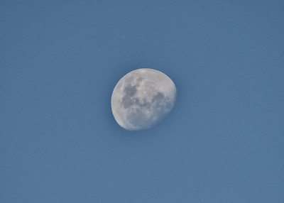 BOV_1067-7x5-Moon