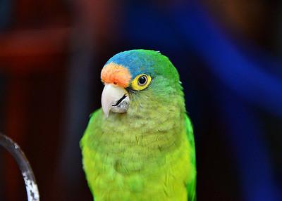 NIC_7290-7x5-Bird