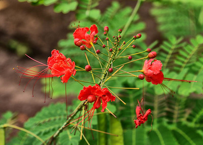 NIC_7362-7x5-Flower