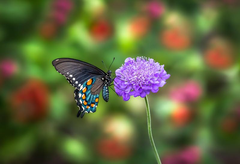 """""""Lavender Delight"""""""