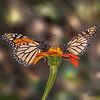 """""""Social Butterflies"""""""