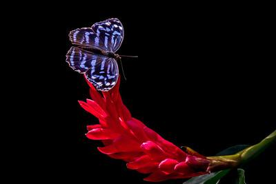 """Blue Winged Dream"""