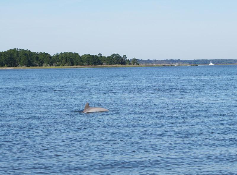 Dolphin Seabrook Island, SC