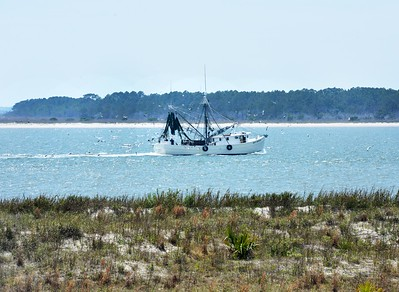 Fishing Boat and Trailing Gulls, Seabrook Island, SC