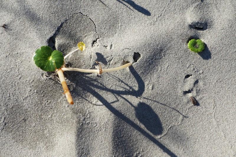 Beach Art on Seabrook Island, SC