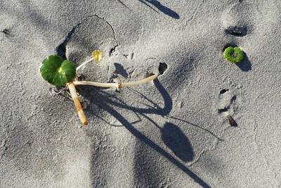Beach Art on Seabrook Island, SC