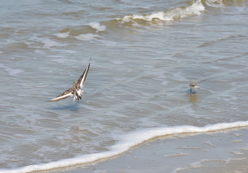 Bird Fishing Seabrook Island, SC