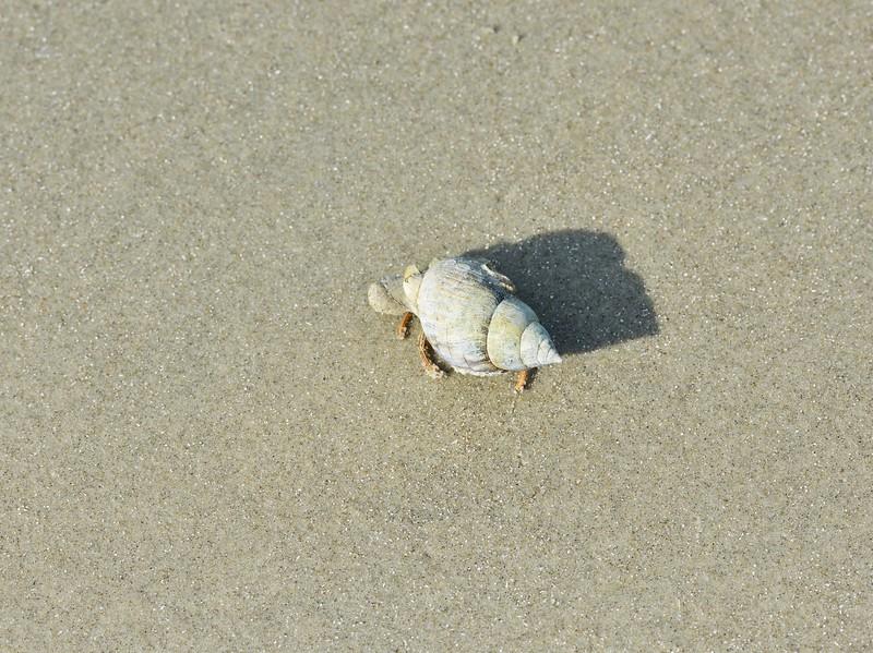 Crab on Seabrook Island, SC Beach