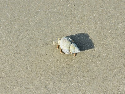 Crab on Seabrook Island, SC Beach