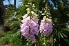 Flowers @ Seabrook Island, SC