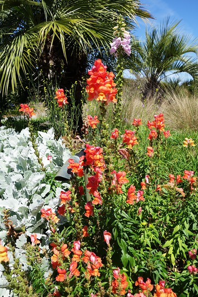 Flowers @ Seabrook Island SC