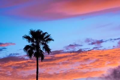 """Palm Tree Sunset"""