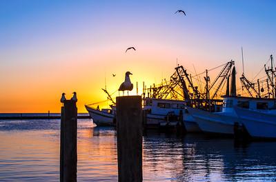 """""""Seagull Sunrise"""""""