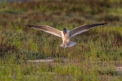 """""""Seagull Landing"""""""