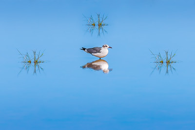 """Perfect Gull Symmetry"""