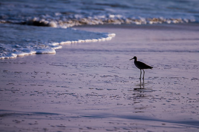 """Plover Silhouette"""