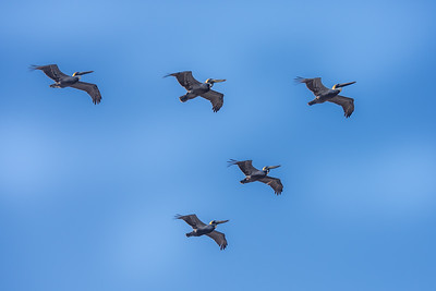 """""""Flying Formation"""""""