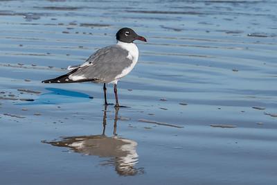 """Seagull Swim"""