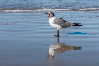 """Sleepy Seagull"""