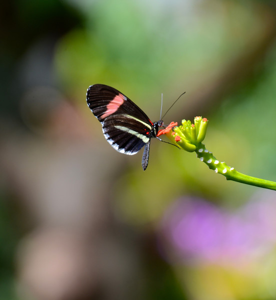 BT - Butterfly - Extra (Sm).jpg