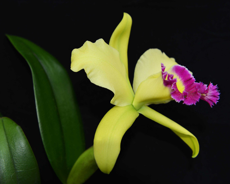orchid 9 (20x25)sm.jpg