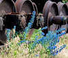 train wheels and wildflowers