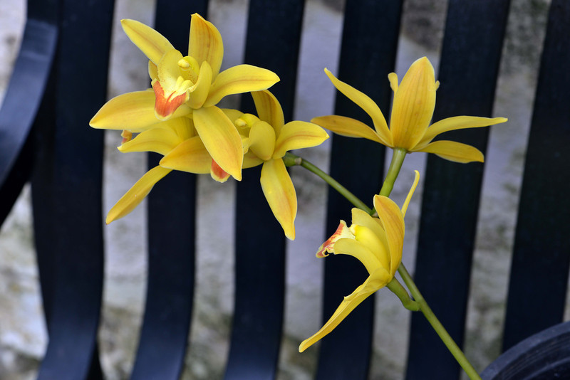 orcids_yellow_30x20 sm.jpg
