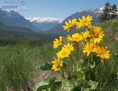 Kimberley-Nature-Park-Sunflower-Hill-8824-8823-flat-Janice-Strong