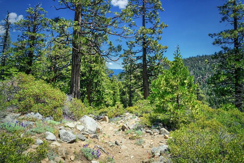 Meeks Creek Trail looking towards Lake Tahoe