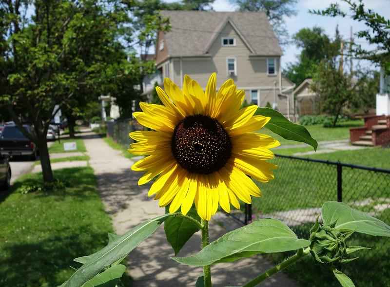 Detroit Shoreway Garden Walk 3 small.jpg