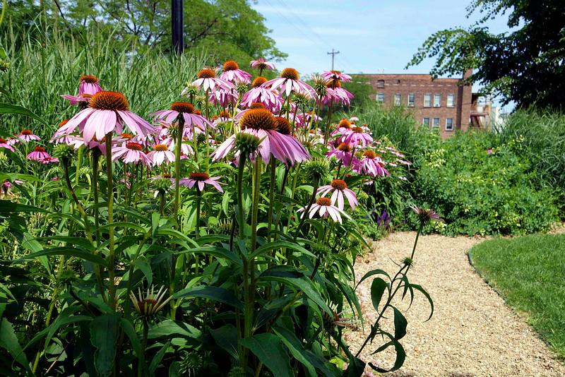 Detroit Shoreway Garden Walk 2 small.jpg