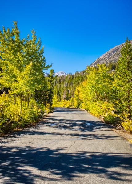 Fall along Rock Creek Road