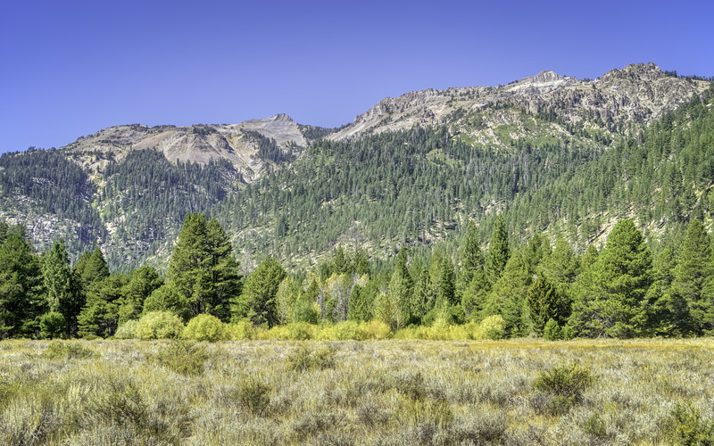 Looking across Dumont Meadow at the Sierra Crest.