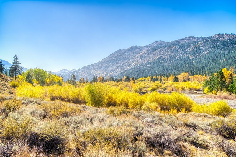 Fall colors taking over Leavitt Meadows
