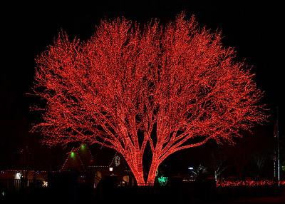 NEA_3465-7x5-Red Tree