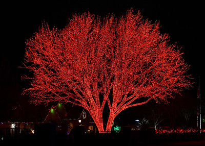 NEA_3465-7x5-Red Tree