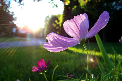 beautiful, bright... and purple