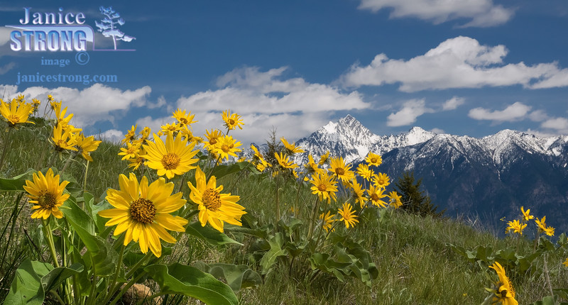 Fisher-Peak with Balsamroots-2014-6040-6028-
