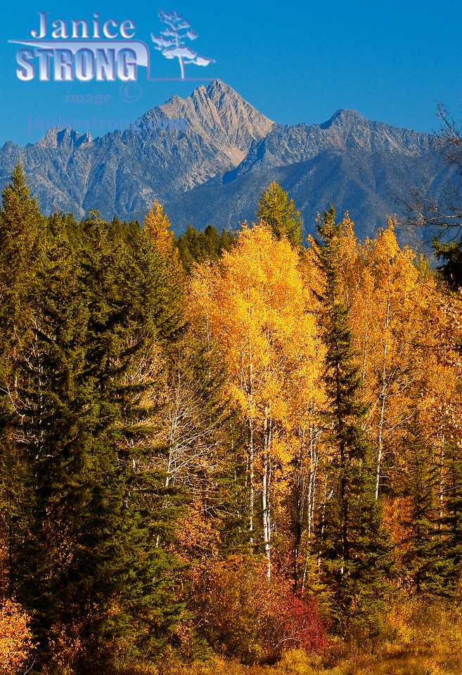 1213 Fisher  Peak with Yellow Aspens