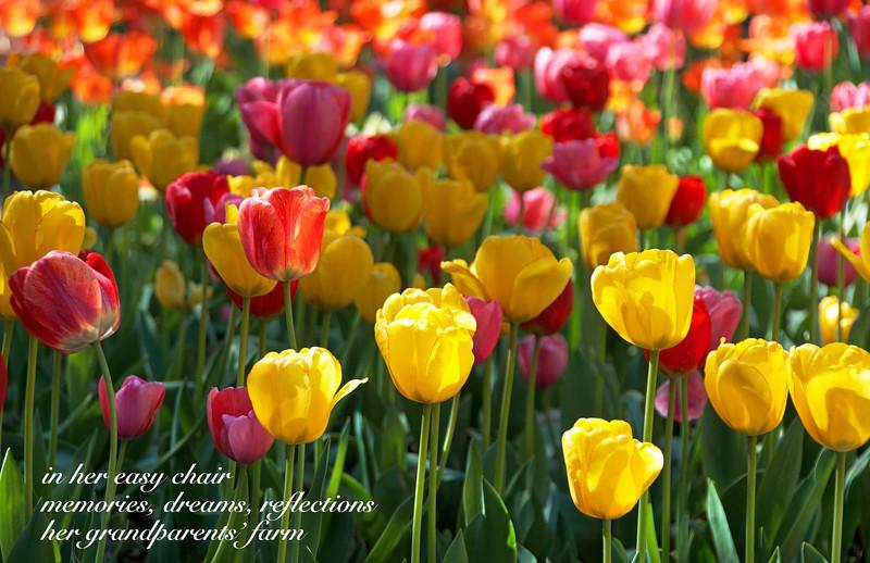 Flowers-95.jpg