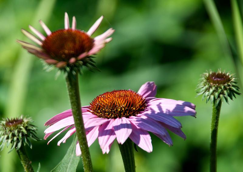 Flowers-134.jpg