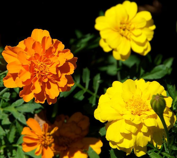 Flowers-31.jpg