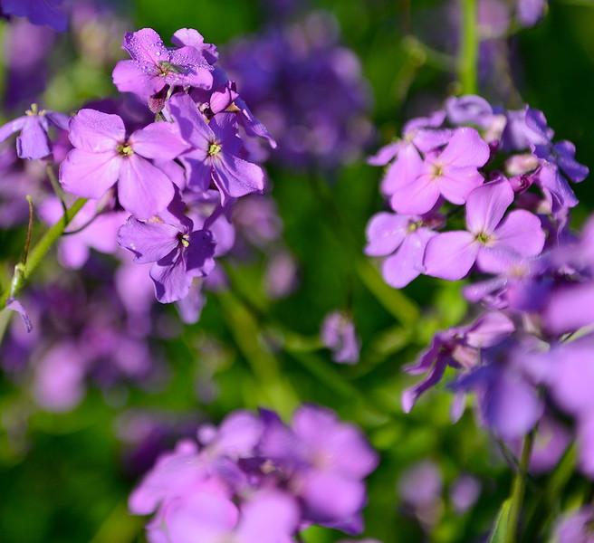 Flowers-153.jpg