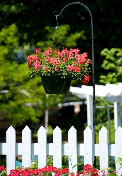 Flowers-120.jpg