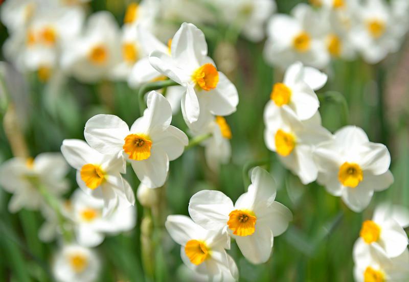Flowers-172.jpg
