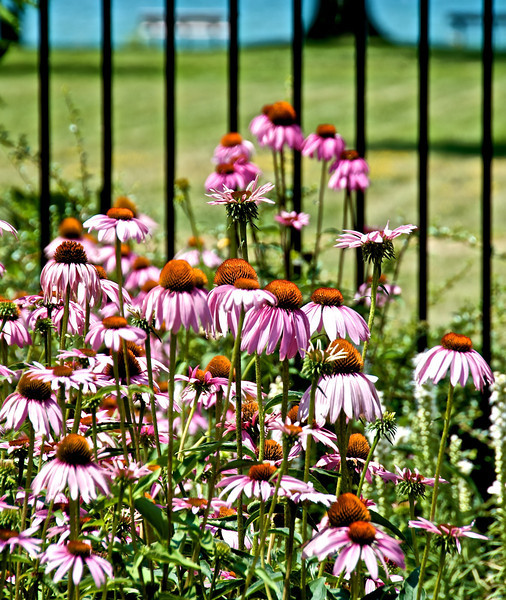 Flowers-140.jpg