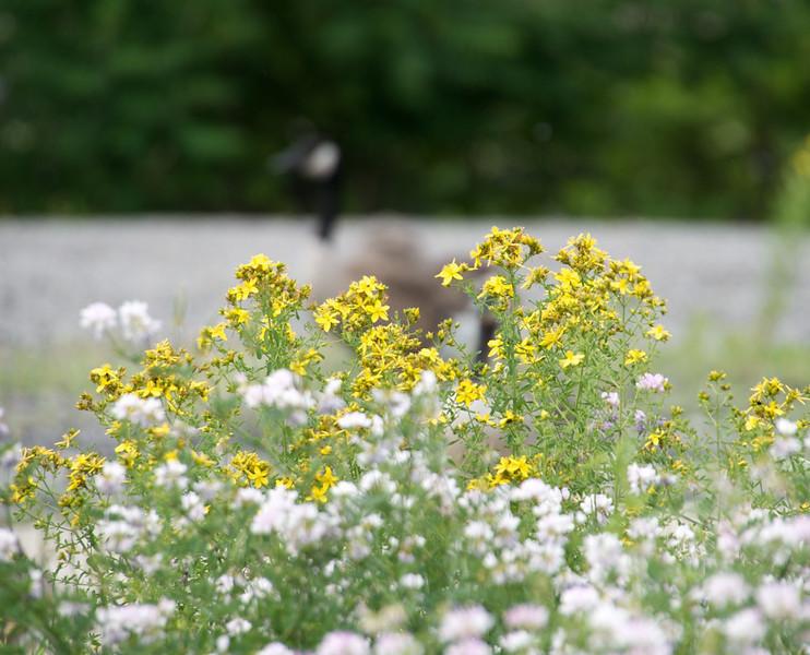 Flowers-128.jpg