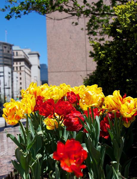 Flowers-25.jpg