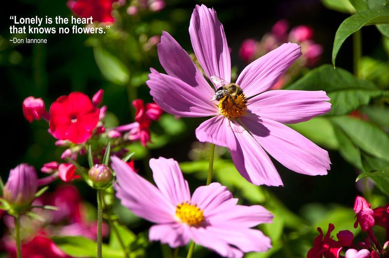 Flowers-39.jpg