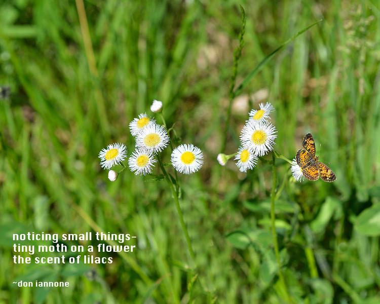 Flowers-175.jpg
